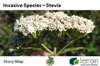Stevia Story Map