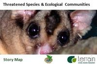 Threatened Species Wet Tropics Mahogany glider mabi forest southern cassowary